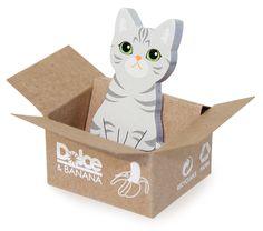 HOYA / Ameraican Shorthair - Kitty House-it