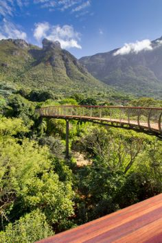 The Boomslang canopy
