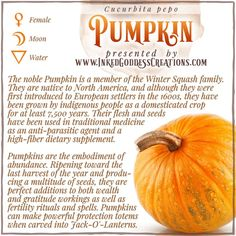 """A Pumpkin is actually a modified berry known as a pepo (from Greek """"pepon,"""" """"melon""""), and their seeds are called pepitas. The flesh, seeds, leaves, and flowers are all edible. Who's ready for Pumpkin pie? // #pumpkin #NationalPumpkinDay #kitchenwitch #magick #fall #harvest #abundance #fertility #wealth #protection"""