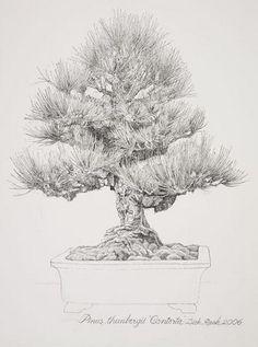 "Dick Rauh, Pinus thunbergii 'Contorta', 2006. Pen and ink on D'Arches 300# hot press, 20"" × 16"". © Copyright Brooklyn Botanic Garden"