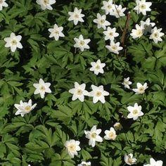 Wenn du die Pflanzen liebst, ihnen mit Freude, Offenheit und Achtung entgegentrittst; werden sei dir ihre Geheimnisse offenbaren. Plants, Openness, Communication, Glee, Planters, Plant, Planting