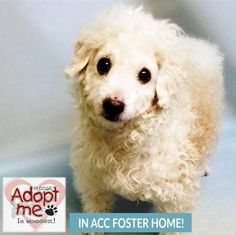 Casper 20776 needs adoption !  CURRENTLY IN THE FOSTER CARE PROGRAM THROUGH THE SHELTER but CAN be returned at ANY TIME.