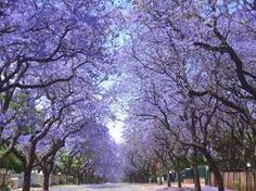 Resultado de imagen para primavera en buenos aires