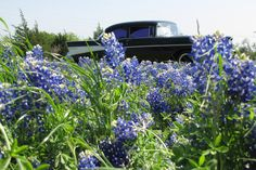 '57 Chevy at the Denison Dam Bluebonnets