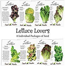 Learn all about collecting and storing lettuce seeds from the garden. Soon you'll be growing lettuce from seed year after year for free.