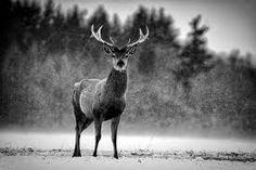 Risultati immagini per black and white