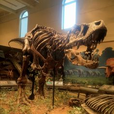T. rex fossilized skeleton. Dinosaurs In Their Time, Carnegie Museum of Natural History.