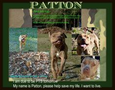 2/17/14 -- STILL THERE! CODE RED!  PATTON is an extremely underweight, unaltered adult male Bulldog mix that was abandoned by his owner. Please save PATTON and give him a chance to know real love from a human. PATTON is located at Wakulla county Animal Control in Crawfordville, FL. To rescue or adopt, please contact us at cauzicanfl@gmail.com https://www.facebook.com/CauzicanCare/photos/a.481349358608117.1073741829.481195381956848/616563851753333/?type=1&theater
