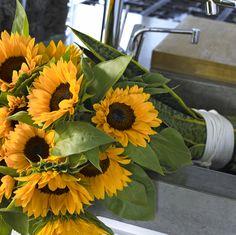 Mehr Infos zu Sonnen- und allen anderen Blumen findet ihr unter Tollwasblumenmachen.de