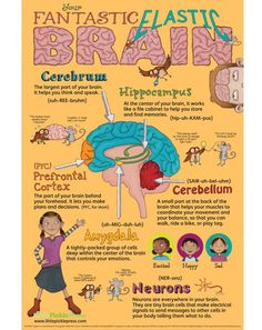 Fantastic Elastic Brain Poster. Love this! There is a book to go with it as well. Would work along with  Conscious Discipline too.