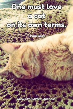 eharmony must love cats