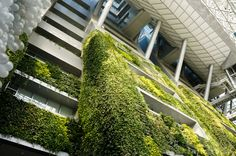 CDL's condominium Tree House in Singapore has set a new Guinness World Record as the world's largest vertical garden.