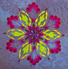 Mandala art by Kathy Klein, made of real flowers http://www.pinterest.com/source/danmala.com/