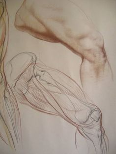 VK is the largest European social network with more than 100 million active users. Leg Anatomy, Anatomy Study, Anatomy Reference, Drawing Legs, Body Drawing, Life Drawing, Human Anatomy Drawing, Human Body Anatomy, Anatomy Sketches
