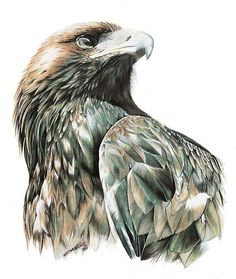 bird artwork Abstract Landscape Paintings is part of Abstract Bird Paintings Fine Art America - Wedge Tail Eagle by ZiyaEris AnimalArt Art Drawing Bird Bird Drawings, Animal Drawings, Cool Drawings, Drawings Of Eagles, Eagle Sketch, Adler Tattoo, Wedge Tailed Eagle, Eagle Drawing, Eagle Painting