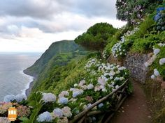 Visit São Miguel island and discover one of the most beautiful places in Portugal. If you're a nature lover and enjoy amazing landscapes visit the Azores! Places In Portugal, Portugal Travel, Lisbon Portugal, Algarve, San Miguel Azores, Beautiful Islands, Beautiful Places, Amazing Places, Terceira Azores