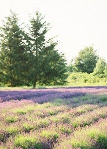 You searched for Lavender - Once Wed