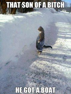 This cat just cracks me up.