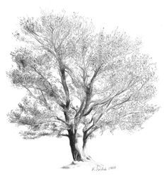 how to draw realistic trees - Google Search