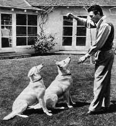 Gregory Peck with his beloved dogs.