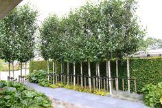 Creatief idee met berkenbomen