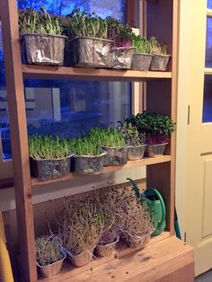 Make a Shelf for indoor gardening with no lights needed