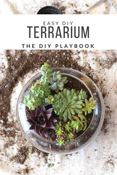 Looking for a quick and easy way to incorporate some greenery into your home? This DIY Terrarium is super easy to create and very little maintenance. Such an easy way to add more greenery and fresh life to your space! We love this simple crafty DIY projec Mason Jar Terrarium, Diy Terrarium, Mason Jar Diy, Hanging Terrarium, Colorado Springs, Colorado Homes, Garden Plant Stand, Plant Stands, Diy Pipe Shelves