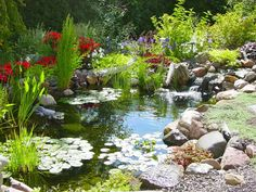 Backyard pond and garden landscaping design.
