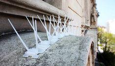 Taubenabwehr-Spikes verhindern das Absitzen von Vögeln wi Window Ledge, Window Sill, Pigeon