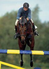 Abke 1999 Hanoverian stallion