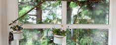 DIY - Fensterdeko mit Gänseblümchen