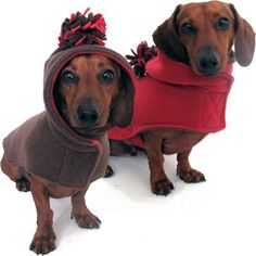 Warm and cute... Yes, I am willing to dress my dog in the MN cold.