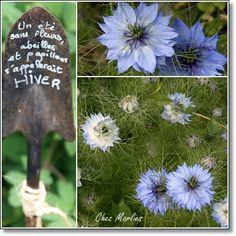 Leider kenne ich den Namen dieser zarten Blume nicht. sie erinnern mich immr etwas an Kornblumen.