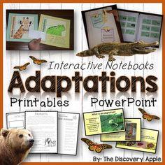 1000 images about african animals worksheets on pinterest african animals worksheets and africa. Black Bedroom Furniture Sets. Home Design Ideas