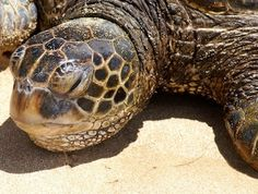 Seat Turtle Rescued.