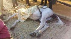 Petición · Ministerio de Justicia: Carcel a los causantes de la muerte de caballos por agotamiento en la feria de abril · Change.org
