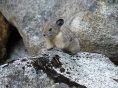 North Cascades National Park Animals | Five Adorable Critters Protected by National Parks ...