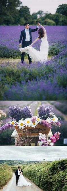 Pre wedding photo shoot in lavender fields