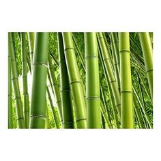 Apalis Bambus Tapete Vliestapete Bamboo Trees Fototapete Breit, Vliesfototapete Wandtapete Wandbild, mehrfarbig, 109030-683779-1374996
