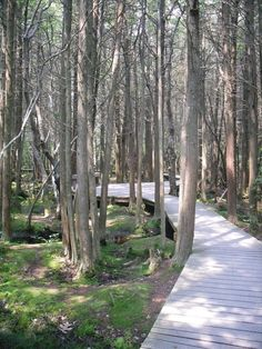 The White Cedar Swamp, Wellfleet - A part of the Cape Cod National Seashore, the white cedar swamp is the perfect place to take a meditative walk surrounded by nature.