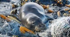The War Against Ocean Trash: Hunting an 11-Ton Abandoned Fishing Net