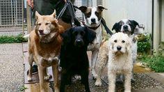 PÜNKTLICH ZUM FERIENBEGINN 5 hilflose Hunde im Wald ausgesetzt