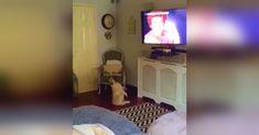 Este pug escucha a Wham! en la TV y hace estos histéricos movimientos de baile ante la cámara #viral