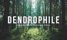 Dendrophile - Person who loves trees, forests.   Apparently I am a dendrophile.