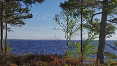 2-ACRE LOT FOR SALE IN ACKWA NEAR YOUNGS COVE ON GRAND LAKE, NB - Buckwheat Point Estates