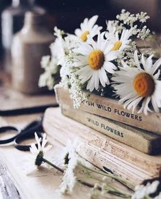 All Nature Beauty 37 Ideas Spring Aesthetic, Flower Aesthetic, Book Aesthetic, Aesthetic Vintage, Aesthetic Photo, Aesthetic Pictures, Nature Aesthetic, Aesthetic Girl, Book Flowers