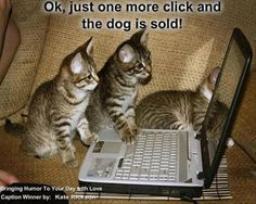Cutest pictures of cute kittens - Too Cute To Handle Cute Funny Animals, Funny Animal Pictures, Funny Cute, Cute Pictures, Funny Pics, Funniest Pictures, Funny Images, Funny Jokes, Funny Stuff