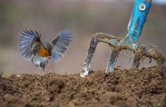 The Very Best of Bird Photography Photography Competitions, Photography Awards, Wildlife Photography, Animal Photography, Most Beautiful Images, Beautiful Birds, Ara Hyacinthe, European Robin, Grey Heron