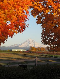 Mount Hood fall beauty in Oregon.