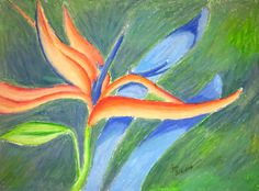 Orchid (oil pastel on sketchpad) #newhobby